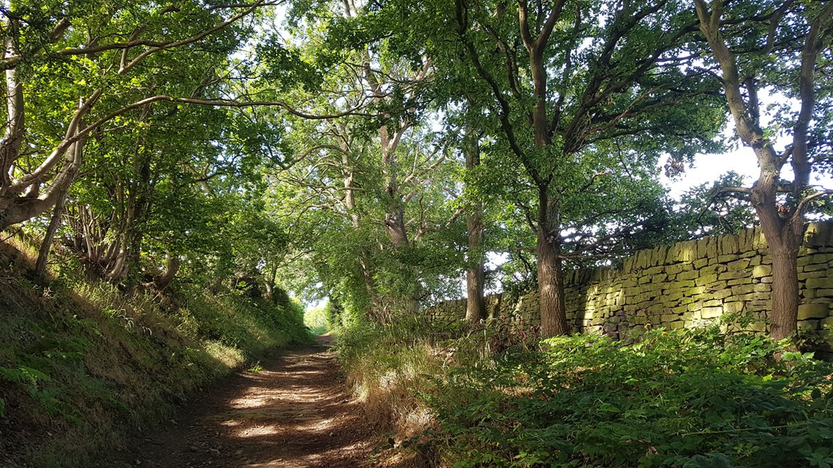August 2020 Walk - Tree Lined Path